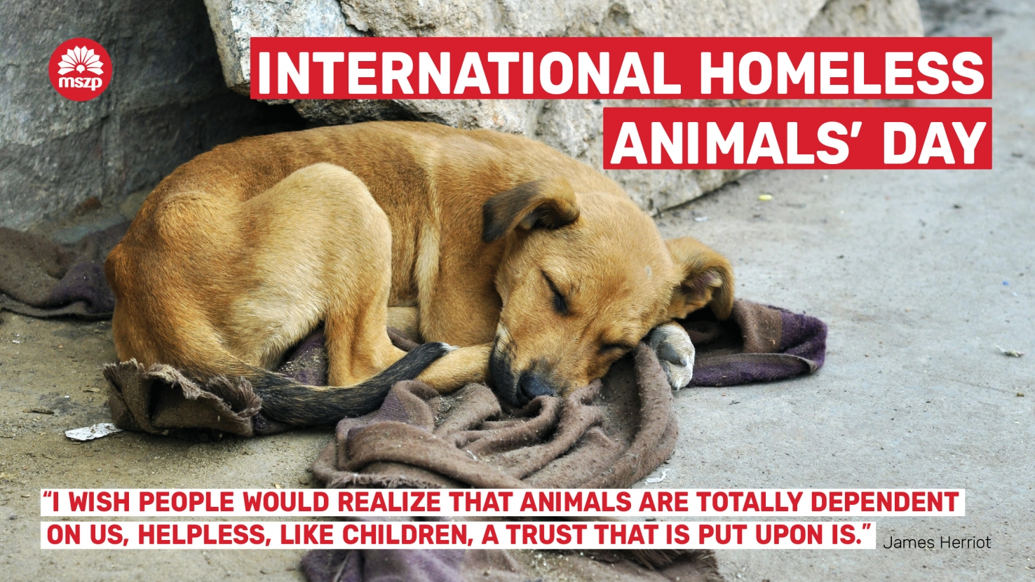 International Homeless Animals' Day